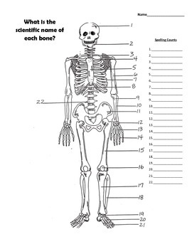 Games and Activities for the Human Skeleton
