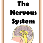 Nervous System  Games and Activities for Middle School