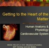 Getting to the Heart of the Matter ~ Cardiovascular System 2
