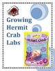 Growing Hermit Crab Science Labs (Set of 4)