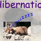 Hibernation - Preparation and Different Animals