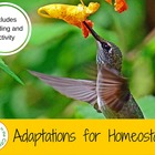 Homeostasis and Adaptations