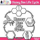 Honey Bee Life Cycle Clip Art [LINE ART]