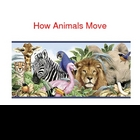 How Animals Move