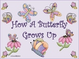 How a Butterfly Grows Up