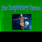 Human Anatomy and Physiology: The Respiratory System