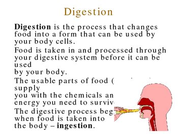 Human Digestion PowerPoint Presentation Lesson Plan
