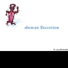 Human Excretion PowerPoint Presentation Lesson Plan