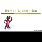 Human Locomotion - Muscles Bones PowerPoint Presentation L