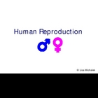 Human Reproduction and Development PowerPoint Presentation