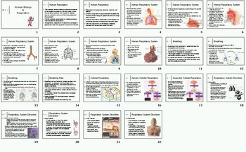 Human Respiration Smartboard Notebook Presentation Lesson Plan