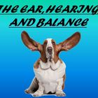 Human Senses - The Ear Notes Powerpoint Presentation