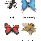 Insect Cards
