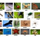 Insect vs. Non Insect Sort