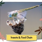 Insects and Food Chain - CC Science