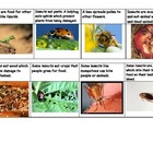 Insects can be Helpful and Harmful