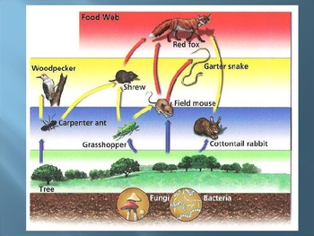 Interdependence of Living Things PowerPoint