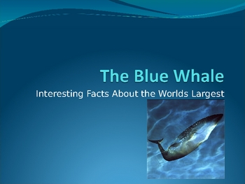 Interesting Facts About the Blue Whale