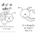 Is It an Insect? Emergent Reader Freebie