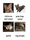 Kinds of Bats 3 Part Cards