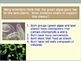 Kingdom Protista Review Question and Answer PowerPoint