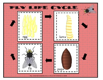 LIFE CYCLE FOLDER GAME FOR LITERACY STATIONS