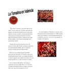 La Tomatina Valencia, Spain Cultural Event Tomato