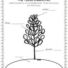 Label the Bluebonnet Worksheet
