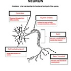 Label the Parts of a Neuron