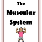 Labs and Activities for the Muscular System