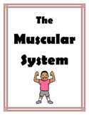Muscular System Labs and Activites for Middle School