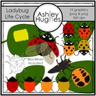 Ladybug Life Cycle {Graphics for Commercial Use}