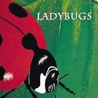 Ladybugs Book