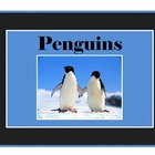 Learning About Penguins: Non Fiction Text with Penguin Fac