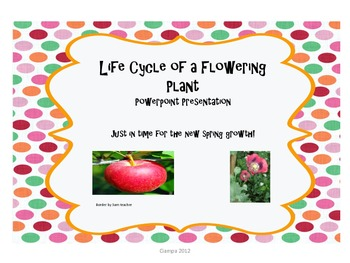 Learning about plant life cycles