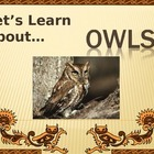 Let&#039;s Learn About Owls! (Powerpoint)