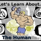 Let's Learn About The Human Body! (Powerpoint) For Elementary