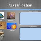 Levels of Animal Classification