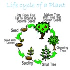 Life Cycle Introduction