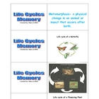 Life Cycle Memory-Butterfly, White-tailed deer, and Flower
