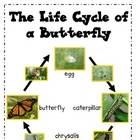 Life Cycle Posters and Activity {Butterfly & Ladybug}