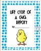 Life Cycle of A Chick Report
