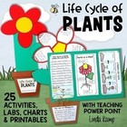 Life Cycle of Plants {20 Activities &amp; Foldable Flower Proj
