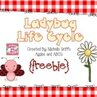 Life Cycle of a Ladybug: {Freebie}