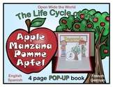 Life Cycle of an Apple Pop-Up Book -FREE!- in Spanish, Fre