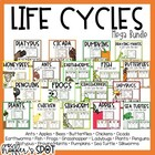 Life Cycles {Mini Units}