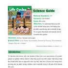 Life Cycles Science Guide