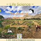 Life Science: The Flow of Energy in an Ecosystem