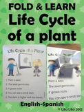Life cycle of a plant Fold & Learn