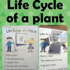 Life cycle of a plant Fold &amp; Learn